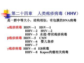 第二十四章    人类疱疹病毒( HHV )