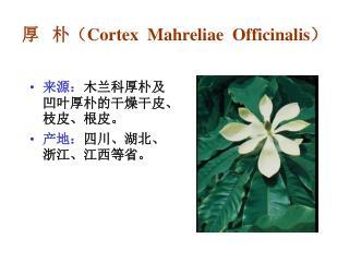 厚   朴( Cortex  Mahreliae  Officinalis )