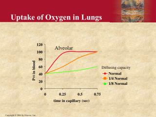 Uptake of Oxygen in Lungs