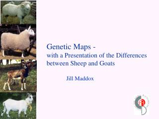 Genetic Maps - with a Presentation of the Differences between Sheep and Goats