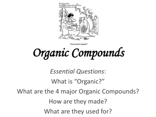 Non protein nitrogen compounds  metabolism