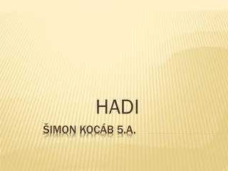ŠIMON KOCÁB 5.A.