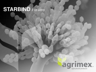 STARBIND  I  In vitro