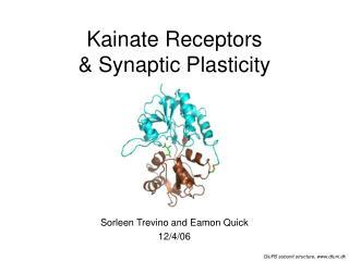 Kainate Receptors  & Synaptic Plasticity