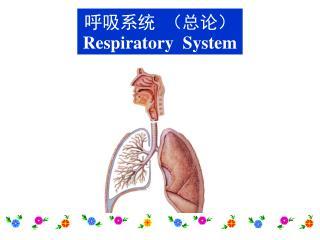 呼吸系统 (总论) Respiratory System