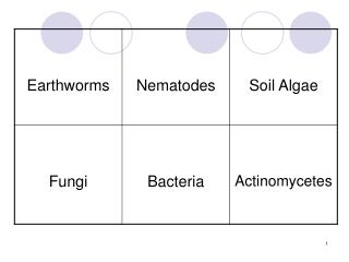 Benefits of Soil Organisms