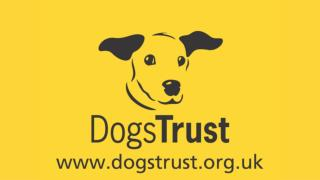 Dress Down Day for  Dogs Trust