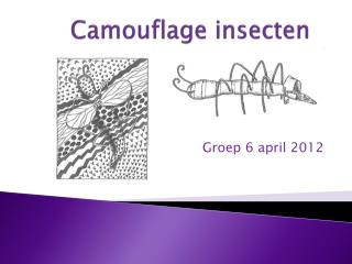 Camouflage insecten