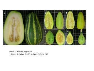 Pool 1: African   agrestis  1-Tibish, 2-Fadasi, 3-HSD, 4-Tayer, 5-CUM 287