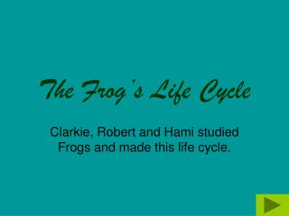 The Frog's Life Cycle