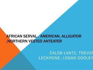 African  serval , american ,  alligator  ,northern  vested anteater