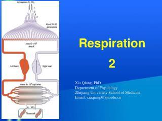 Respiration 2