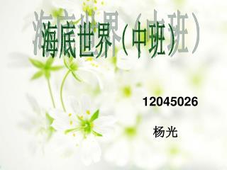 12045026 杨光