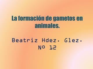 La formación de gametos en animales . Beatriz Hdez. Glez. Nº 12