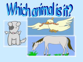 Which animal is it?
