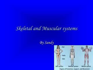Skeletal and Muscular systems