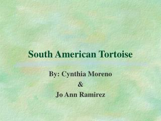 South American Tortoise