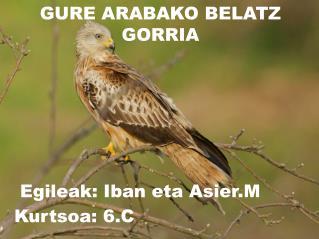 GURE ARABAKO BELATZ GORRIA