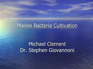 Marine Bacteria Cultivation Michael Clement Dr. Stephen Giovannoni
