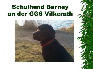 Schulhund Barney an der GGS Vilkerath