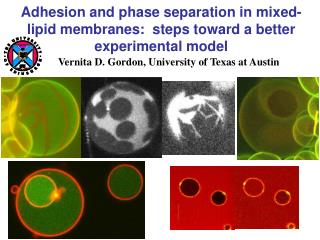 Adhesion and phase separation in mixed-lipid membranes:  steps toward a better experimental model