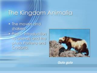 The Kingdom Animalia