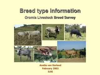 Breed type information Oromia Livestock Breed Survey