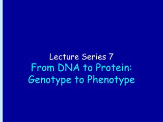 Lecture Series 7 From DNA to Protein: Genotype to Phenotype