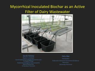 Mycorrhizal Inoculated Biochar as an Active Filter of Dairy Wastewater