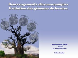 Réarrangements chromosomiques Evolution des génomes de levures
