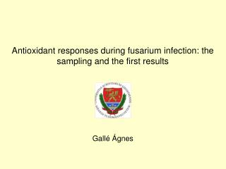 Antioxidant responses during fusarium infection: the sampling and the first results Gallé Ágnes