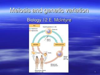 Meiosis and genetic variation