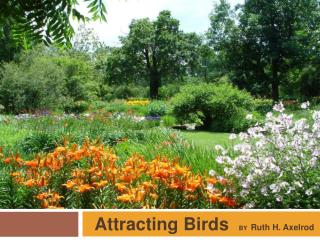 Attracting Birds BY   Ruth H. Axelrod