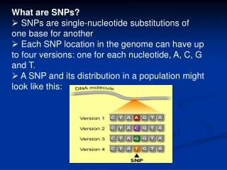What are SNPs?  SNPs are single-nucleotide substitutions of one base for another