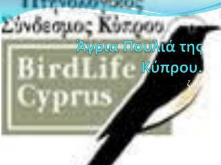 Άγρια Πουλιά της Κύπρου.