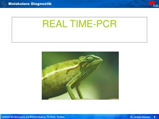 REAL TIME-PCR