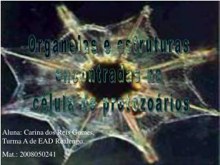 Organelas e estruturas encontradas na  célula de protozoários