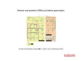 IS Peter & EH Davidson  Nature 000 , 1-5 (2011) doi:10.1038/nature10100