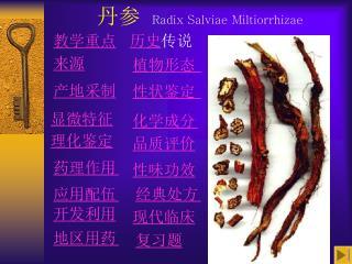丹参 Radix Salviae Miltiorrhizae