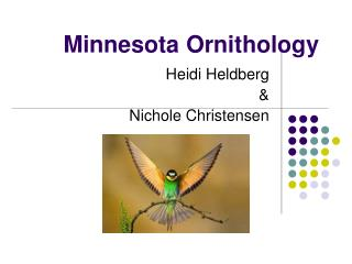 Minnesota Ornithology