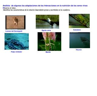 Análisis  de algunas las adaptaciones de las interacciones en la nutrición de los seres vivos