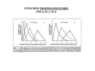 CITOCHINE  PROINFIAMMATORIE TNF- a , IL-1, IL-6