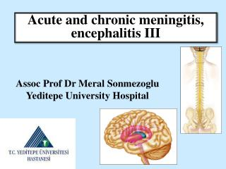 Assoc Prof Dr Meral Sonmezoglu Yeditepe University Hospital