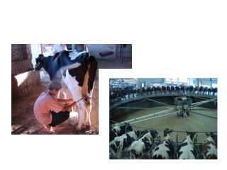 Broj stoke i stočna proizvodnja u RH BROJ STOKE I PERADI  jed. mjere stanje 1. prosinca