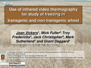 Use of infrared video thermography  for study of freezing in  transgenic and non-transgenic wheat