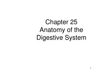 Chapter 25 Anatomy of the Digestive System