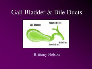 Gall Bladder & Bile Ducts