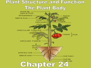 Plant Structure and Function The Plant Body