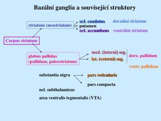 Corpus striatum