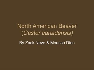 North American Beaver ( Castor canadensis)